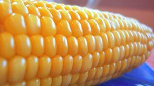 corn-615988-m