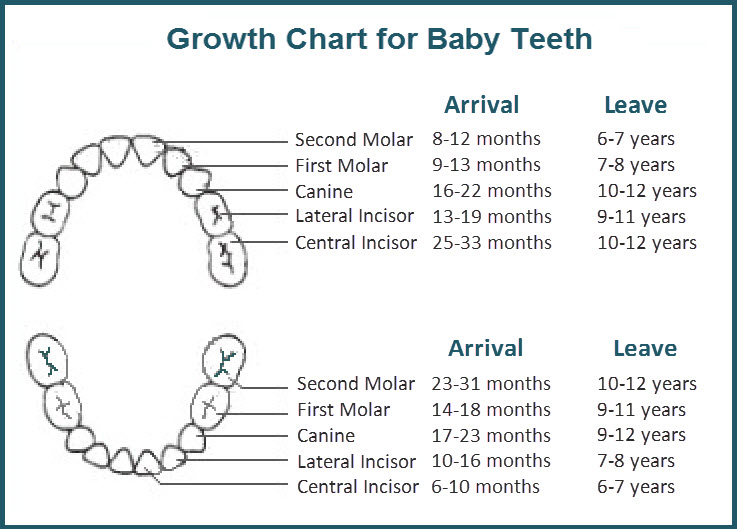 Baby Teeth Do Matter  Your Smile Dental Care Blog